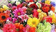 Dizelerde Yer Bulmuş Özel Bir Anlamı Olan 20 Çiçek ve Şiir