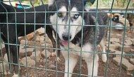 Bolluca Arnavutköy Hayvan Barınağındaki Köpekler Yardım Bekliyor