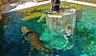 Dünyanın En Çılgın Tatili: Avustralya'da Timsah Havuzu!