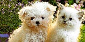 Dünyanın En Şirin Testi: Fotoğraflardaki Yavrular Kedi mi Köpek mi?