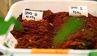 Bilim İnsanları Açıkladı: Mars Toprağı Tarıma Elverişli