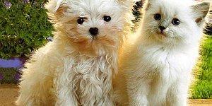 Котенок или щенок? Пройди самый мимимишный тест!