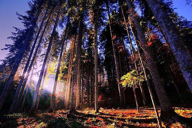 10. Yenice Ormanları / Karabük