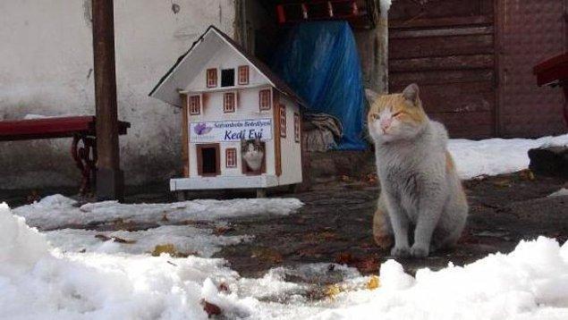 """Kışın soğukta üşümesinler diye kentin kedileri için yapılan bu şirin mi şirin """"Kedi Evleri"""" sizleri de gülümsetecek…"""