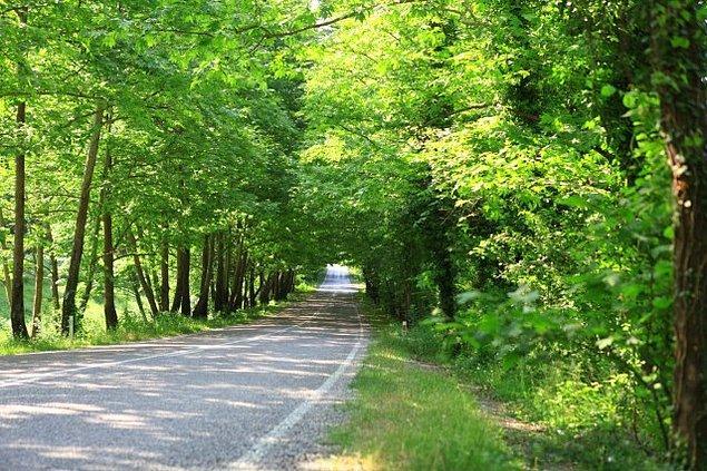 Bonus: Ağaç Tüneli / Karabük- Bartın