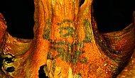 Mısır'da 3 Bin Yaşındaki Mumyada Karmaşık Desenli Dövmeler Bulundu