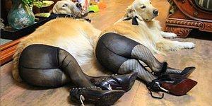 Bunu da Gördük! Çin'de Köpeklere Külotlu Çorap Giydirme Modası Sosyal Medyaya Yayıldı