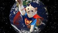 Bir Film Sahnesinde veya Tabloda Karşınıza Çıkabilecek Kedi Pishi ile Tanışın