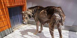 Uyuz Olduğu İçin Suratı Taşa Dönüşen Köpeğin Muhteşem Hayata Dönüş Öyküsü