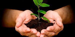 Girdiğiniz Her Kelime Başına Ağaç Diken, Yeşil Sevdalısı Bir Arama Moturu: Ecosia