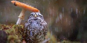 16 гармоничных фото о взаимодействии природы с животными и человеком