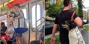 Собакам запрещено появляться в метро Нью-Йорка без переноски: вот, что из этого вышло