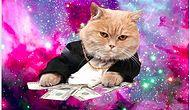 türk kediler bi başka..
