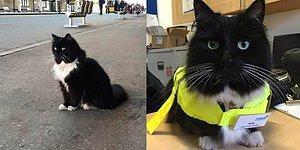 İngiltere'nin En Sevimli Tren İstasyonu Görevlisi Felix'le Tanışın!