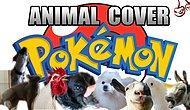 Pokemon'un Efsane Şarkısını Hayvanlar Söylerse