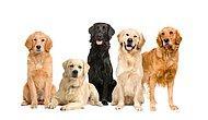 Sana En Uygun Köpek Türü Hangisi?