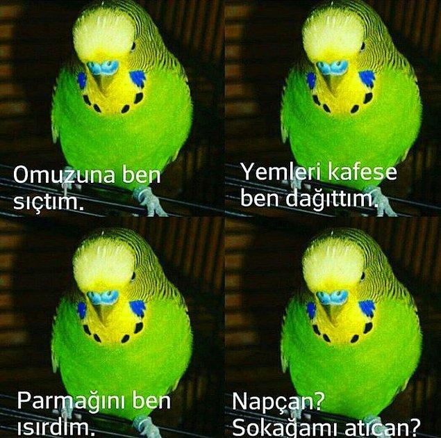 5. Muabbet kuşu