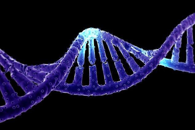 10. Ve tabi ki genlerimiz...