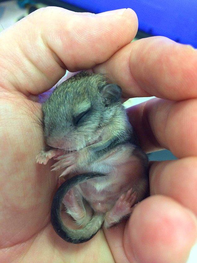 Jeff bulduğu hayvanın ne olduğunu bile tam olarak bilmiyordu. Ama bir bebek olduğu kesindi ve Tampa'nın sıcağında oracıkta ölürdü.
