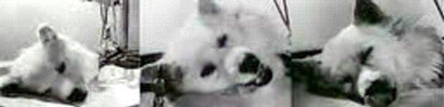"""4. """"Zombi köpekler"""" insanlığı kurtarabilir"""