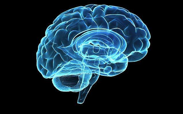 8. Beyin
