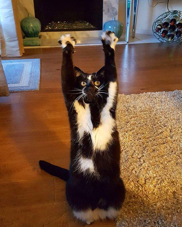 Bu kediciğin adı Keys.