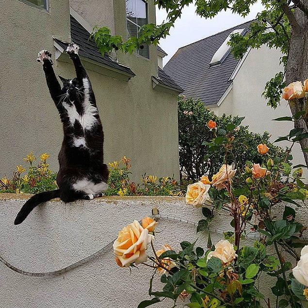 Peter bir sabah sevimli dostunun patilerini havaya kaldırdığını görmüş ve hemen bir fotoğraf çekmiş.