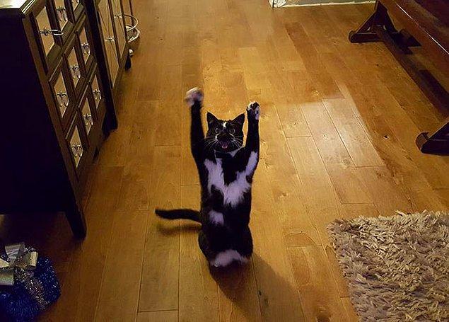 Keys neden böyle bir hareket yapıyor aslında kimse bilmiyor. Sanki görünmez bir Kedi Tanrısı'na tapınıyor.