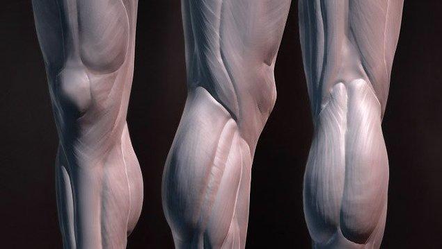 11. Bacaklar