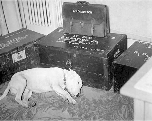 3. General George S. Patton'ın öldüğü gün, generalin sandığının önünde saatlerce yatan köpeği.