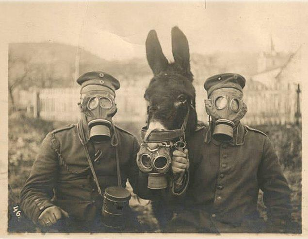 15. I. Dünya Savaşı esnasında gaz maskesi takan Alman askerleri ve ortalarında da bir katır.
