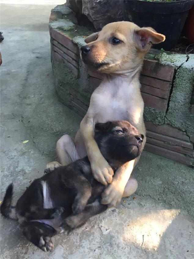 Büyük olan yavru küçük arkadaşını teselli etmek için ona sarılıyordu. Sanki onu korumaya çalışıyordu.