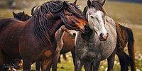 Atların Dünyadaki En Asil ve En Muhteşem Canlılar Olduğunu İspatlayan 39 Enfes Fotoğraf
