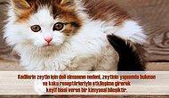 17 Soru ve Cevapla Kedilerle İlgili Bilmeniz Gereken Birbirinden İlginç Gerçekler