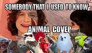 Efsane Şarkı 'Somebody That I Used To Know'u Hayvanlar Söylerse