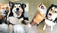 Yüksek Dozda Mutluluk İçerir: Köpeklerin Her Hayvanla Dost Olabileceklerinin 26 Kanıtı