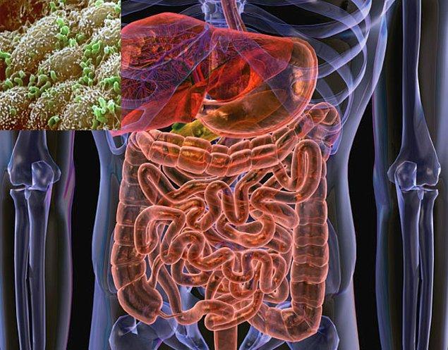 10. Bitkisel besinlerde bulunan lifin, bağırsaklardaki vücuda faydalı bakterilerin üretimini arttırdığı biliniyor.