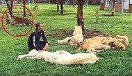 Hayvanat Bahçesi Bakıcısını Leopar Saldırısından Koruyan Kaplan