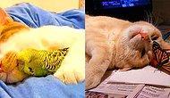 Koşulsuz Sevgi: Kedilerin Her Hayvanla Dost Olabilen Sevgi Yumakları Olduklarının 27 Kanıtı