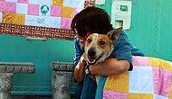 Havladığı İçin Diri Diri Gömülen Engelli Sokak Köpeği Lily'nin Hüzün ve Umut Dolu Hikâyesi