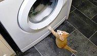 Birbirinden Sevimli Minnoşların Çamaşır Makinesiyle İmtihanı