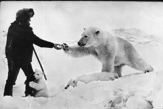 16. Sovyet askeri kutup ayısını beslerken, 1950'ler.