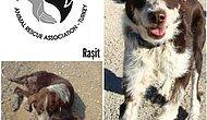 Mağdur Hayvanların  Şans Verildiğinde Mucizeye Dönüştüğünü Gösteren 13 Fotoğraf