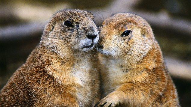 Araştırmanın sonucu ne olursa olsun hayvanlar kadar, insan doğası hakkında da önemli bilgiler vereceği kesin.