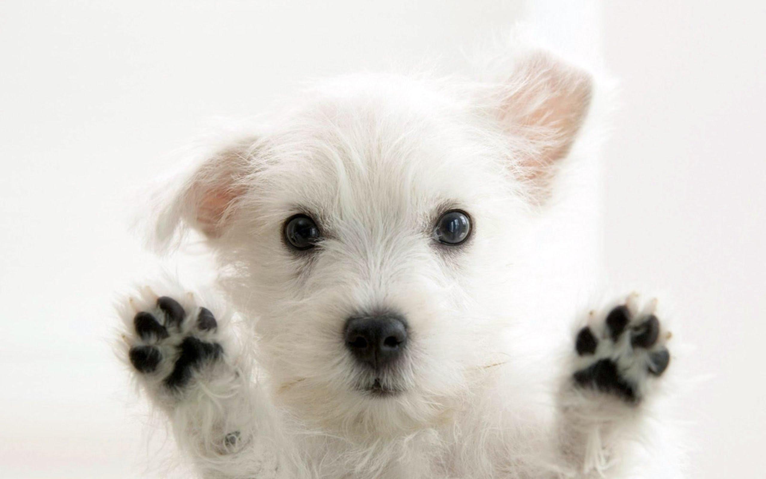 Universal DOG