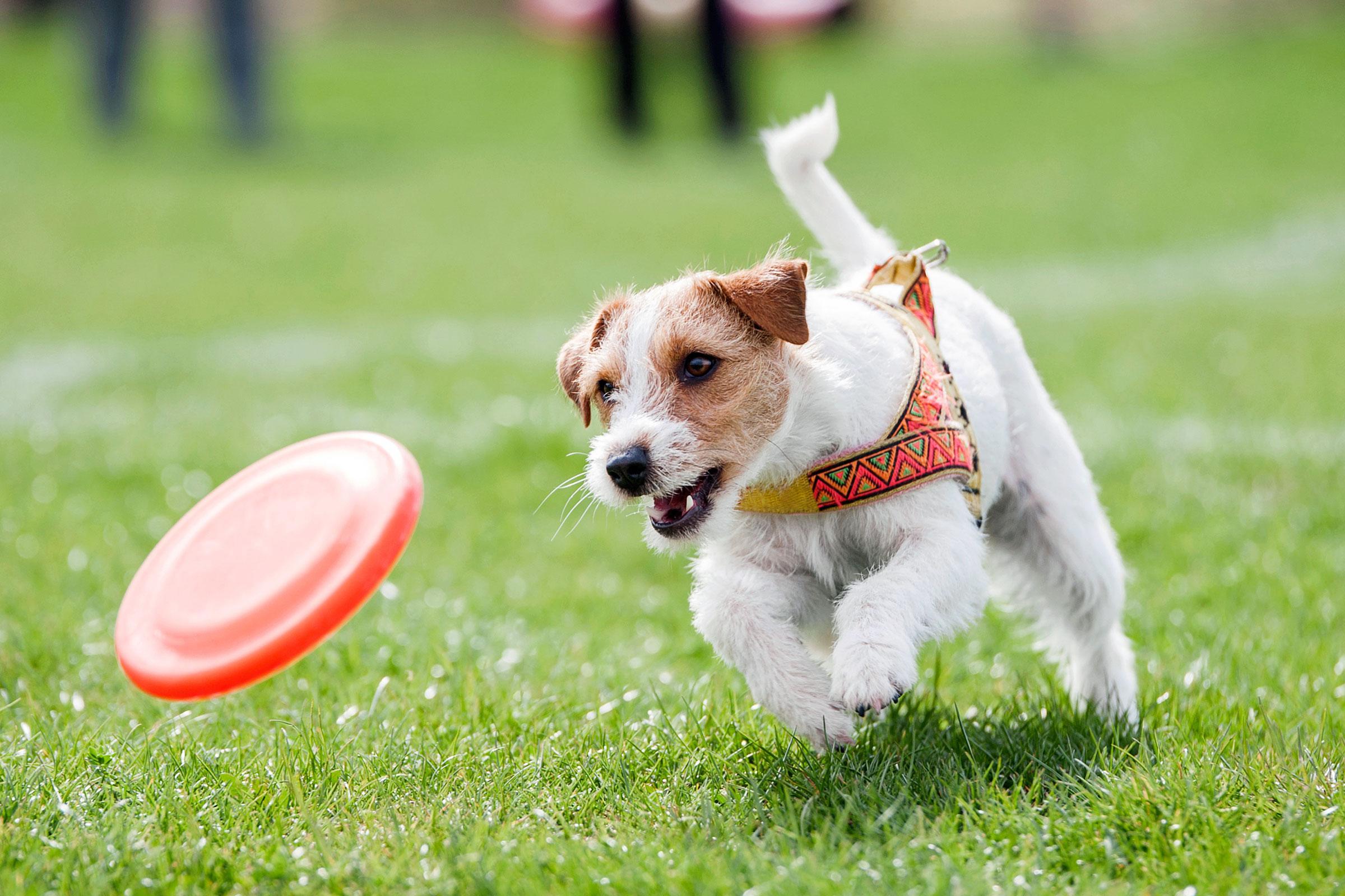 imagen de perro - HD2400×1600