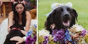 15 Yıllık Sahibinin Düğününe Şahitlik Edebilmek için Ölüme Direnen Vefalı Charlie