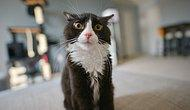 Keyfine Göre Sırala: Şimdiye Kadar İnternet Alemini En Çok Güldüren 19 Şapşik Kedi