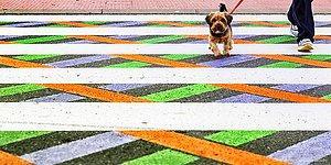 Bulgaristanlı Bir Sanatçı Tarafından Gökkuşağı Renkleriyle Süslenen Madrid Yaya Geçitleri