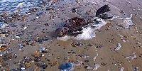 Ölü Denizkızı Sahilde Görüntülendi İddiası